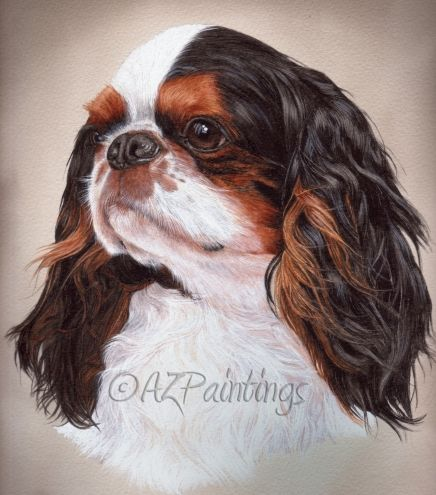 King Charles Spaniel - watercolour of a French Champion, painting by artist Anne Zoutsos
