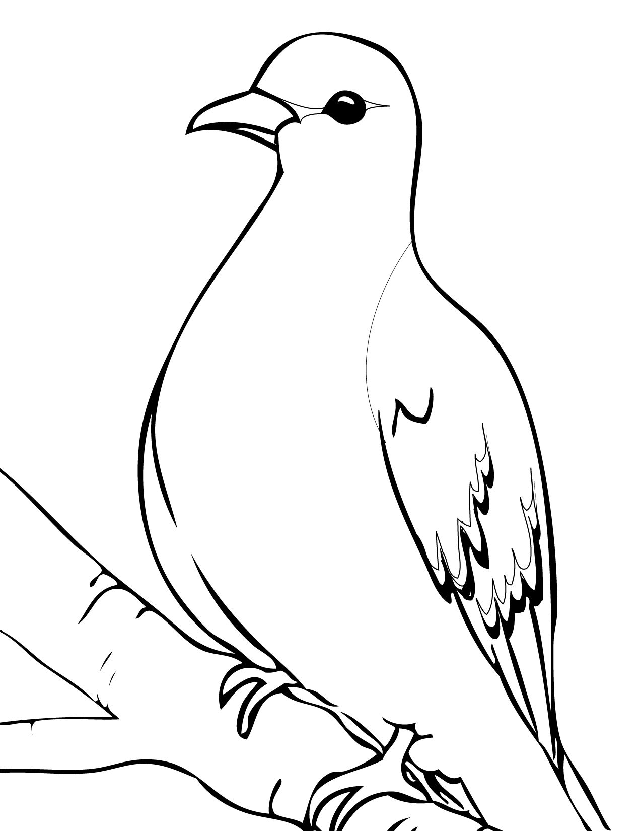 Mourning Dove Ink Jpg 1275 1650 Bird Coloring Pages Mourning