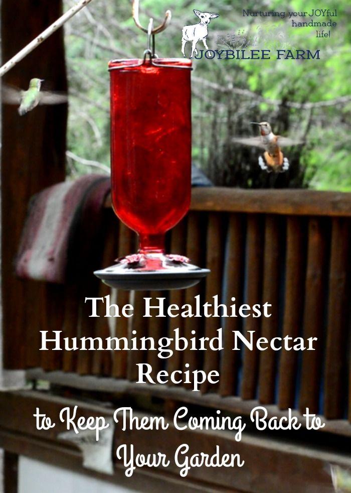 The Healthiest Hummingbird Nectar Recipe Hummingbird Nectar