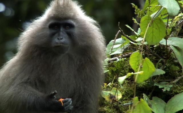 Video: Discovery of the Mysterious Kipunji Monkey in East Africa
