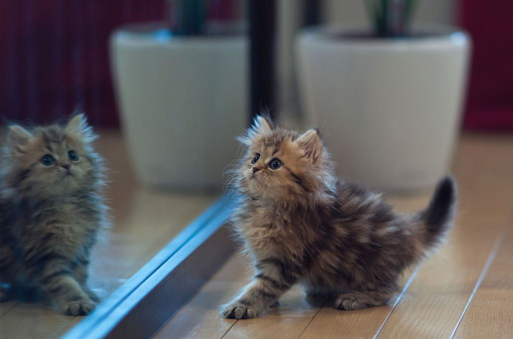 27 tiny cats that will fit perfectly in your tiny house