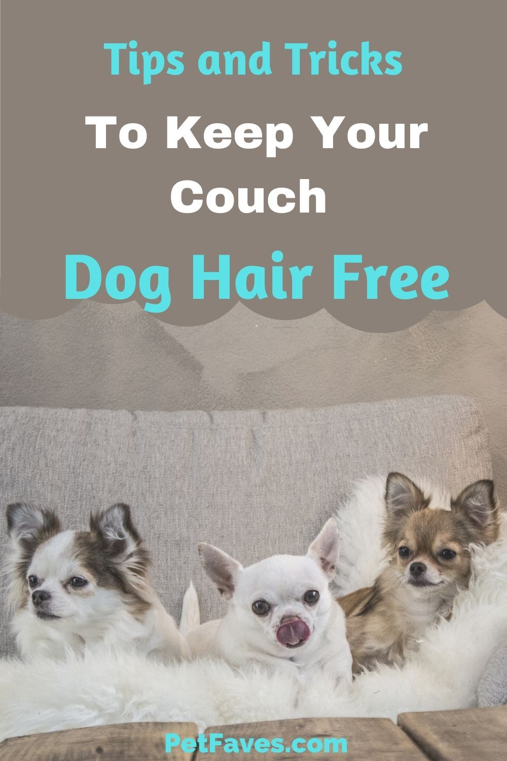 How To Get Dog Hair Off Of Bed Sheets