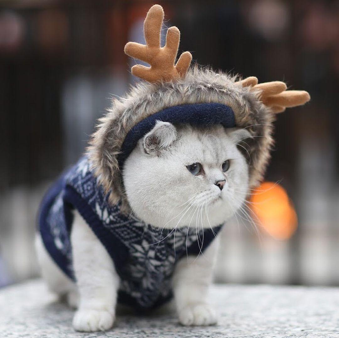 Christmas Cat Scroll Right Joy Christmas Fun Fluffy