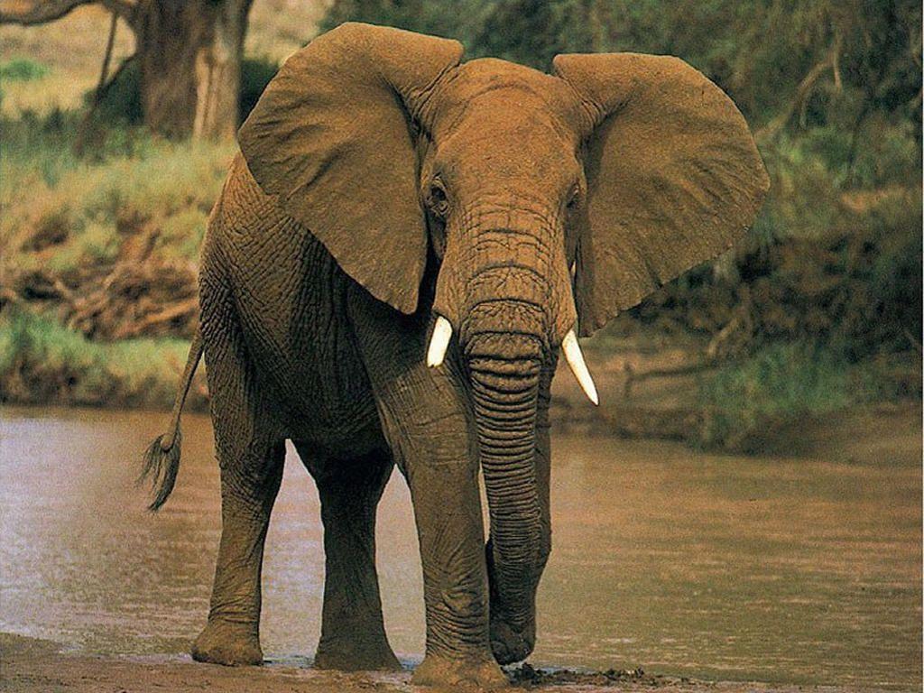 elefantes - Buscar con Google | elefantes | Pinterest | Elefantes ...