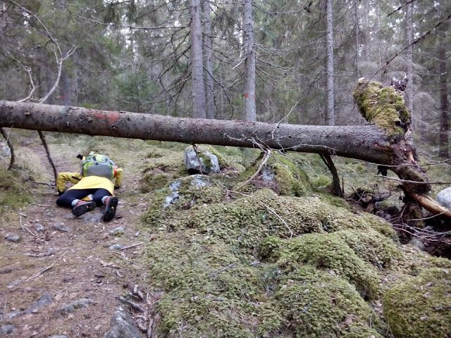 Good thing our bananas are smart and agile enough to be able to navigate the obstacles of the Swedish forest! #Bananvandringen