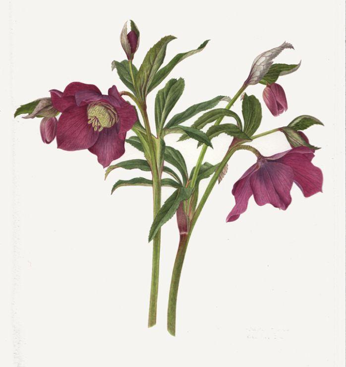 (3) Gallery.ru / Фото #48 - Еще ботаника 2 - A-legria