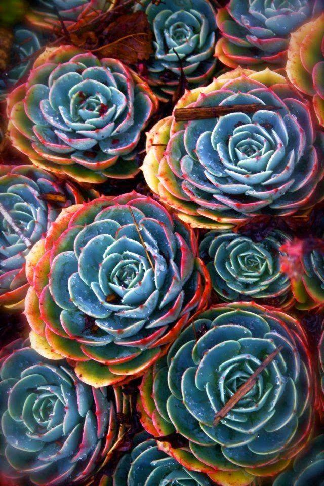 Les 25 meilleures id es de la cat gorie cactus rose sur for Jardin facile cognac