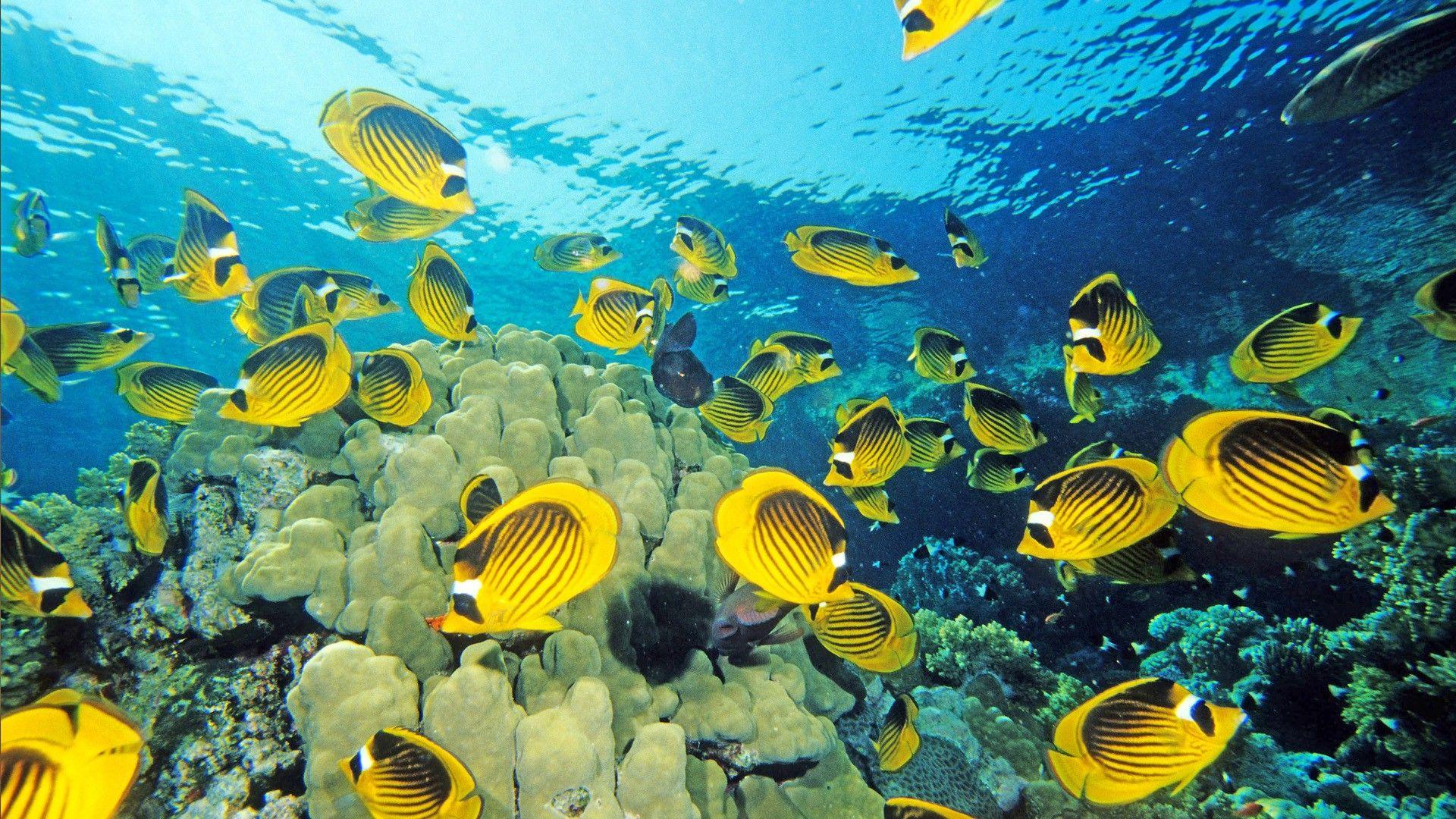 Ocean Life Wallpapers Yellow Fish Animal Wallpaper Fish Wallpaper
