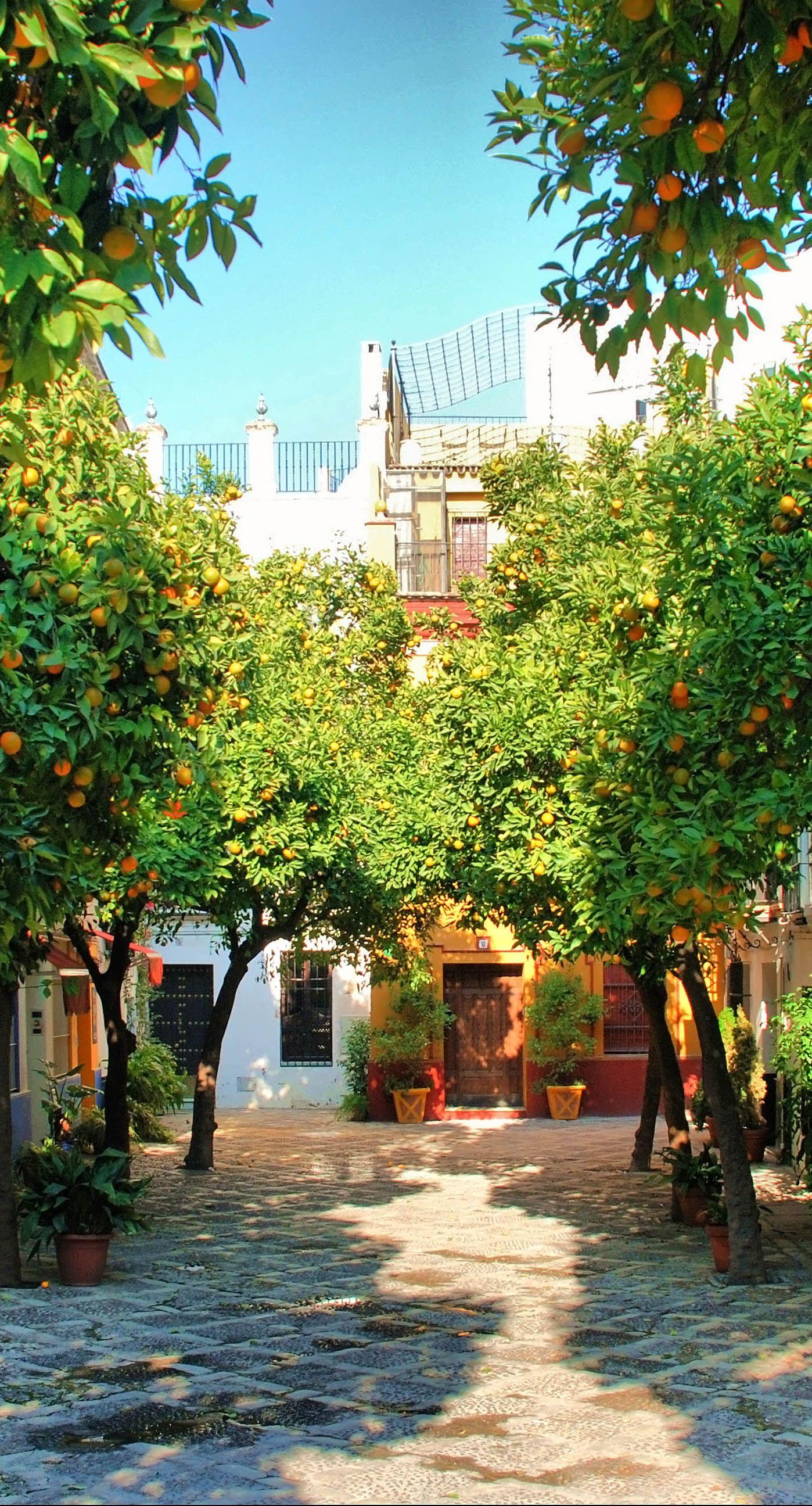 Sevilla Spain Sevilla España Ciudad De Sevilla Lugares De España