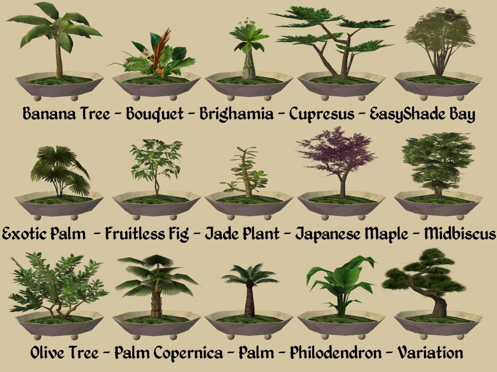 Mod The Sims 15 New Bonsai Plants