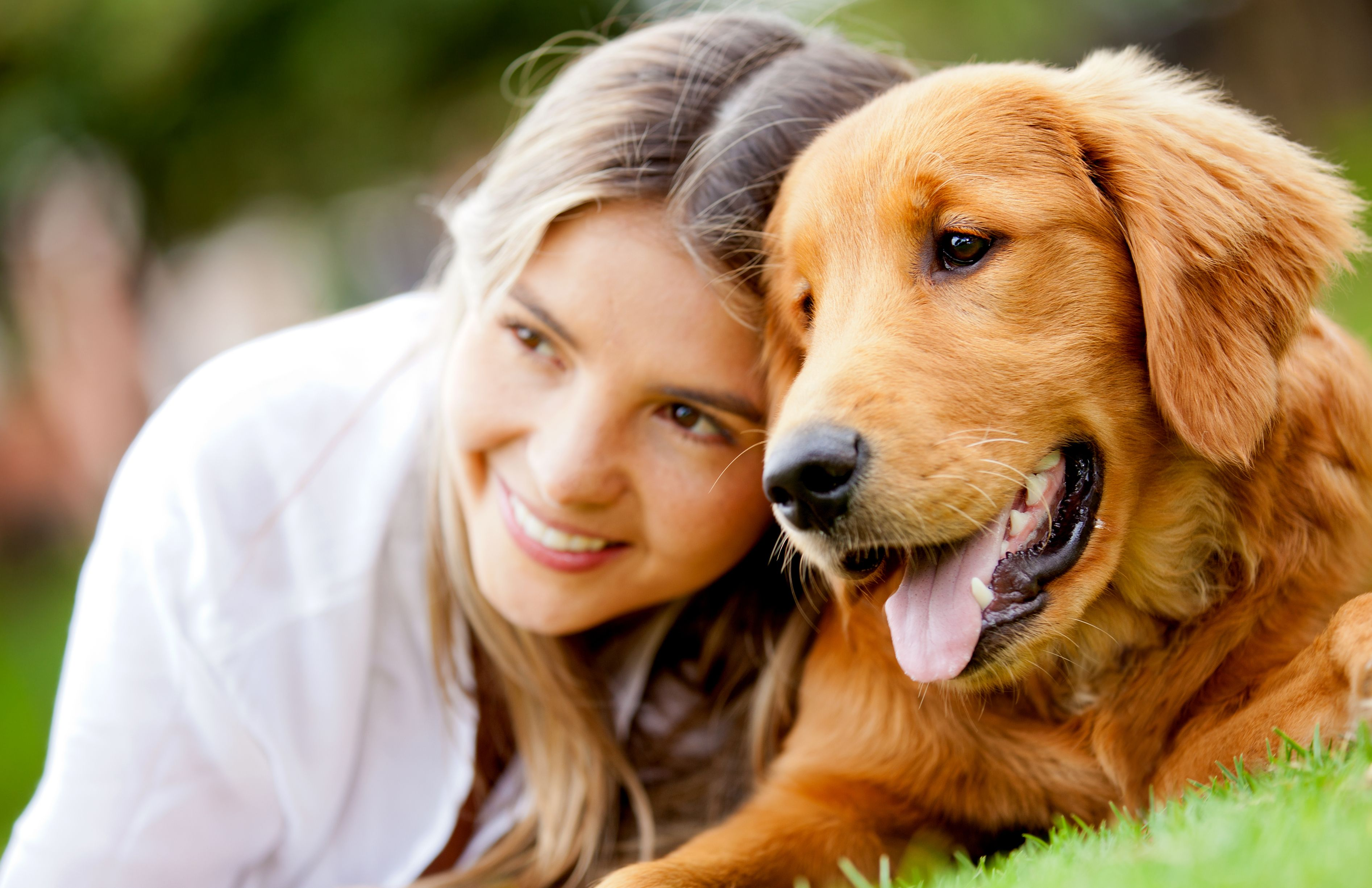 Talk To Your Houston Dentist About Your Wisdom Teeth Popular Dog