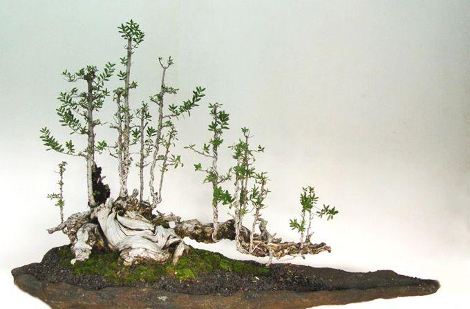 A Steady Stream Bonsai Bark Bonsai Bonsai Forest Indoor Bonsai Tree