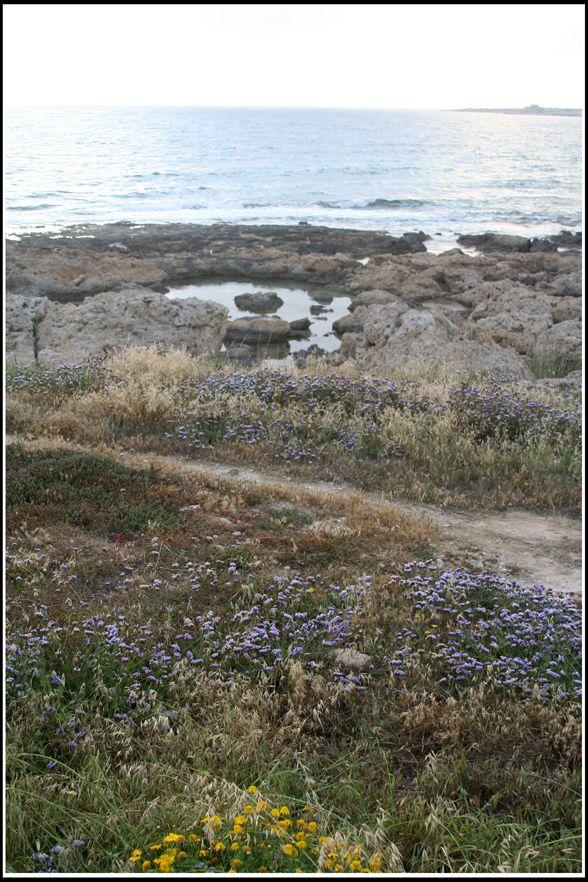 Paphos, Paphos District_ Cyprus
