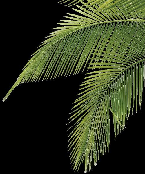 AVATAN PLUS - Социальный Фоторедактор | Иллюстрация дерева ...