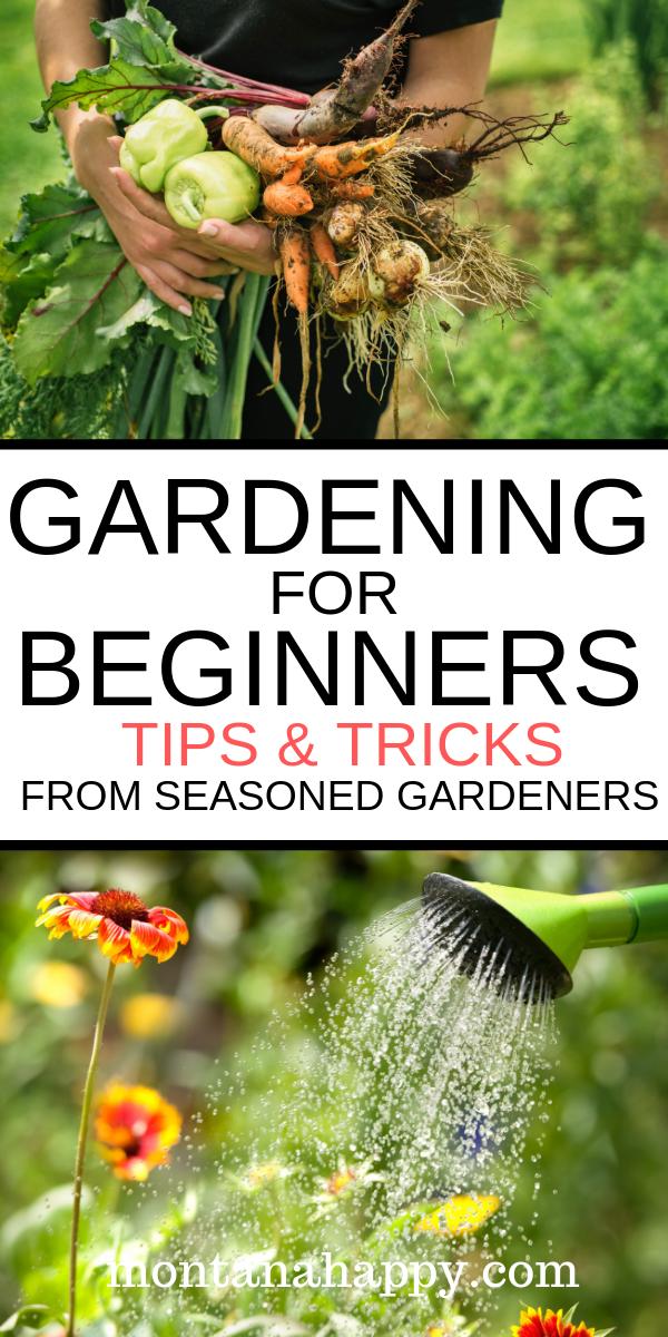 Gardening For Beginners Tips Tricks From Seasoned Gardeners Gardening For Beginners Gardening Tips Garden Pests