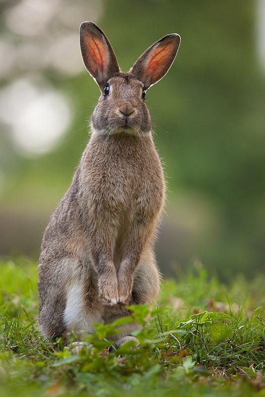 Pin von ~ Danielle D ~ auf Every~Bunny~Welcome   Pinterest   Hase ...