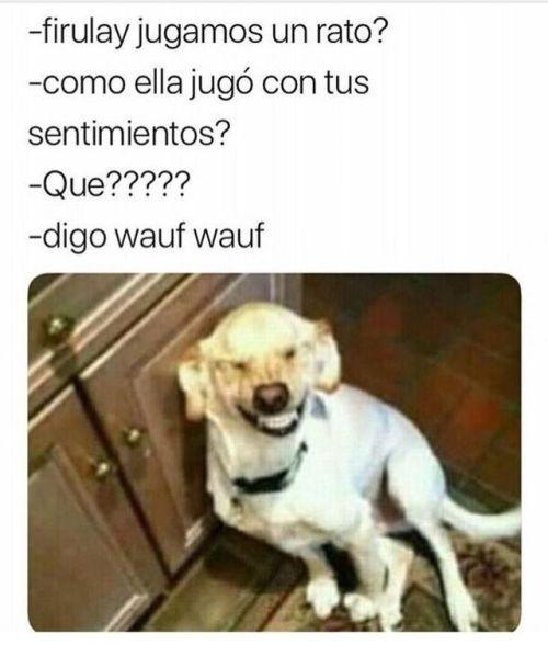 Perros Graciosos Http Enviarpostales Es Perros Graciosos 293 Perros Animales Memes Pinterest Memes New Memes