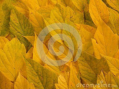 Autumn bright colored leaves background