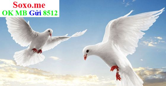 May mắn từ giấc mơ thấy chim bồ câu 001cfaff15ab4ab3a7dfd5a36fd671df