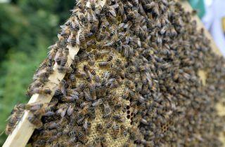 Come eliminare i ragni: insetticidi, rimedi e repellenti ...