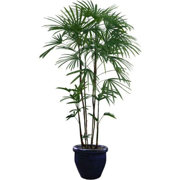Pin By Natalia R On Plants Plants Tropical Plants Planting Shrubs