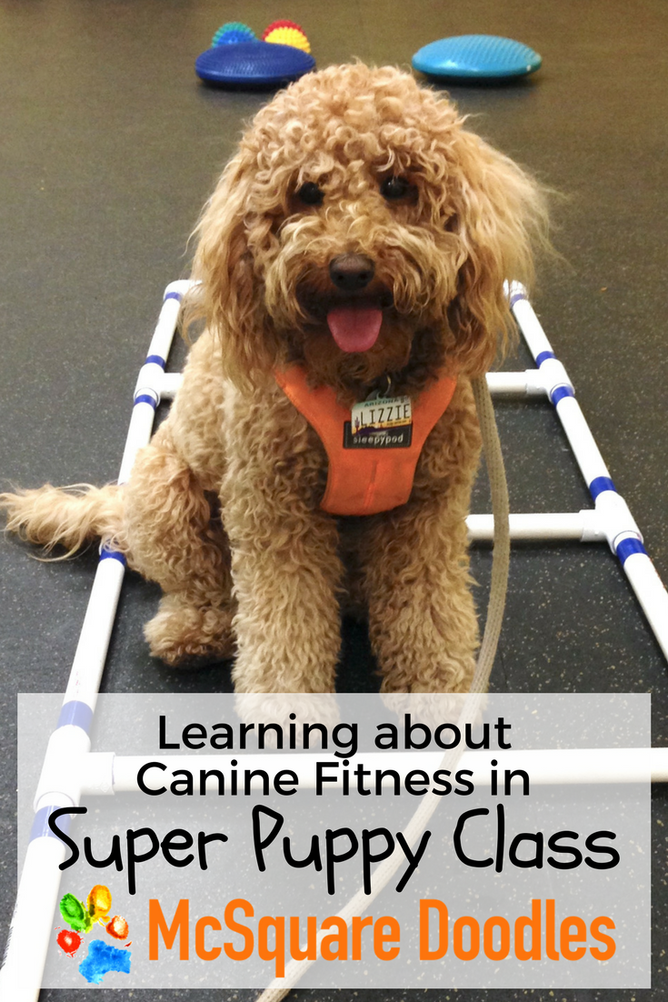 Learning about Canine Fitness in Super Puppy Class