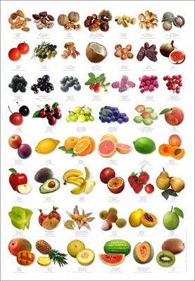 Fruit Identification Poster Receitas Alimentos Saude