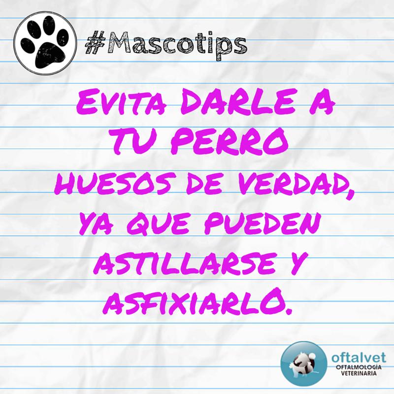 #Mascotips Para ayudar a que salgan todos los... - Hospital Veterinario Oftalvet
