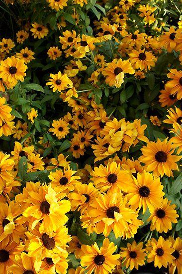 In Full Bloom Fotos brilhantes, Fotos com flor, Flores