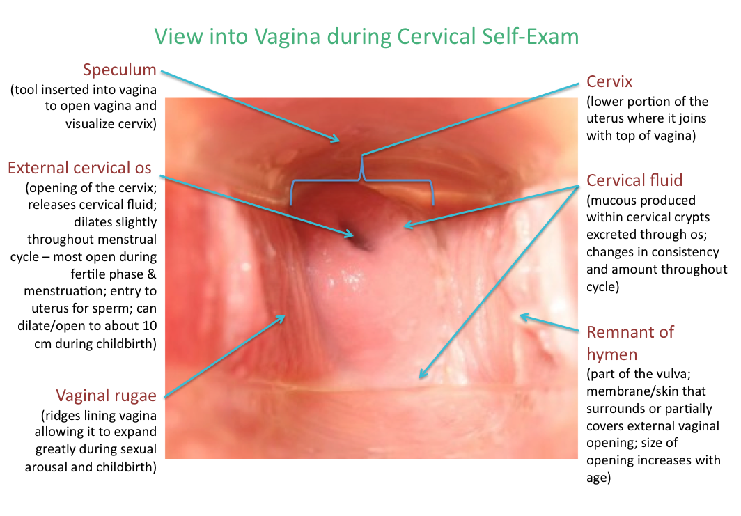 Cervix Photo Galleries