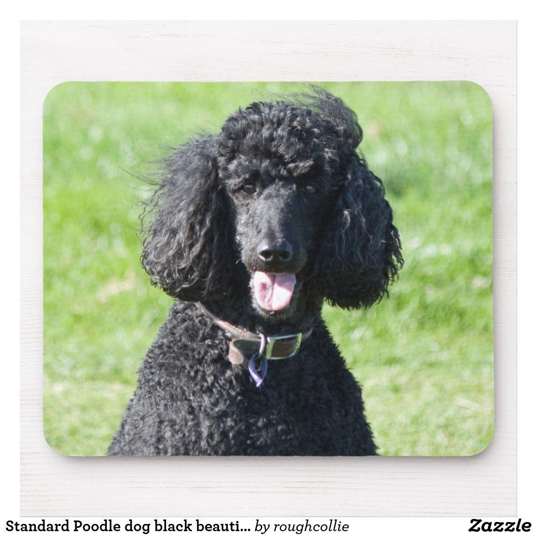 Standard Poodle Dog Black Beautiful Photo Portrait Mouse Pad
