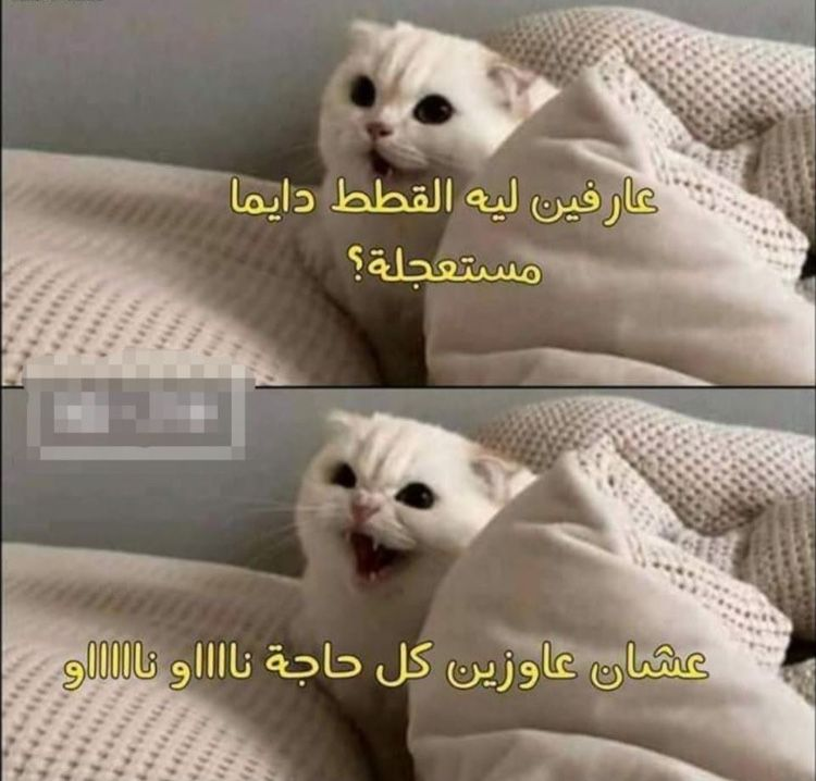 Pin By Basma Mohamed On Deep W M4 Deep Funny Jok Funny Joke Quote Funny Memes