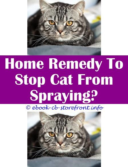 4 Graceful Clever Hacks Keep Off Cat Repellent Spray How To Keep A Cat From Spraying Does Pepper Spray Hurt Cats Are There Any Steroid Nasal Sprays For Aerosol