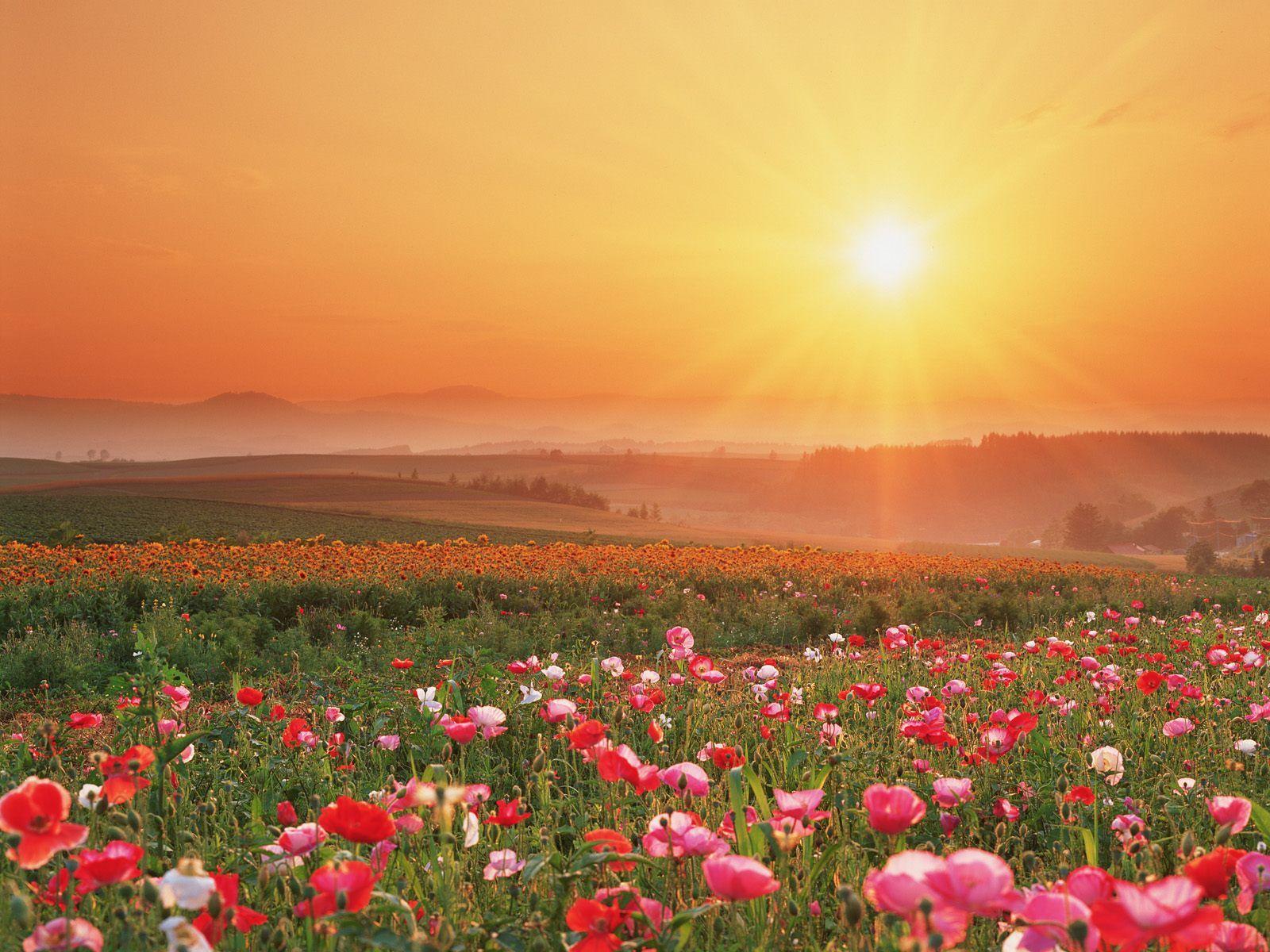Sunrise art pinterest fields flowers and photo s