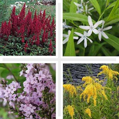 12 Best Plants for Black Thumbs – Best Garden Plants