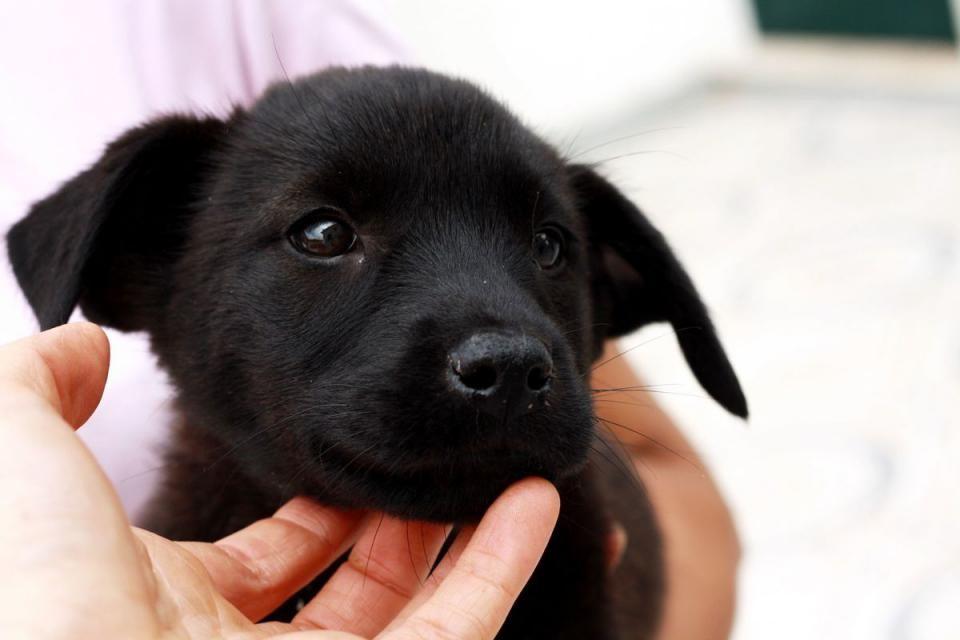 Lorenzo zuckersüßer Welpe » Hunde aus Altfraunhofen