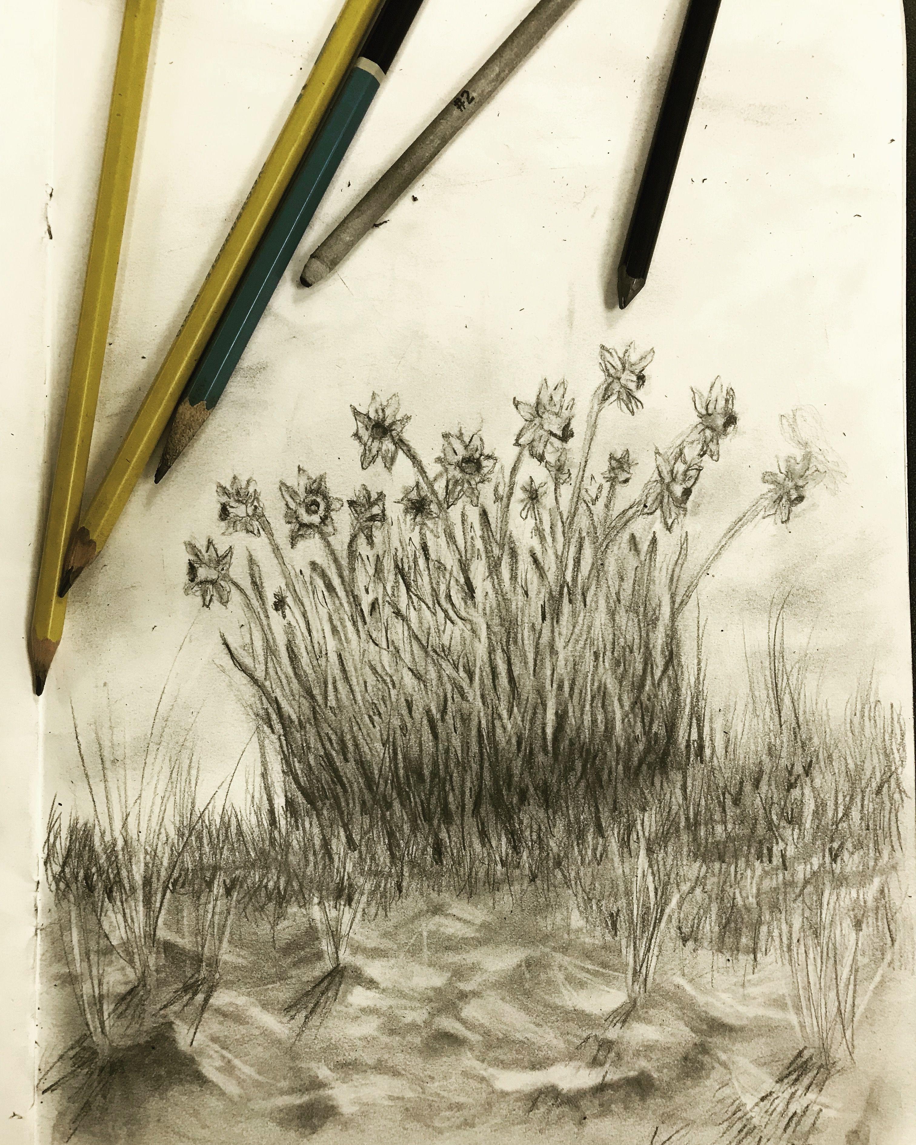 Daffodil drawing my artwork pinterest daffodils and artwork
