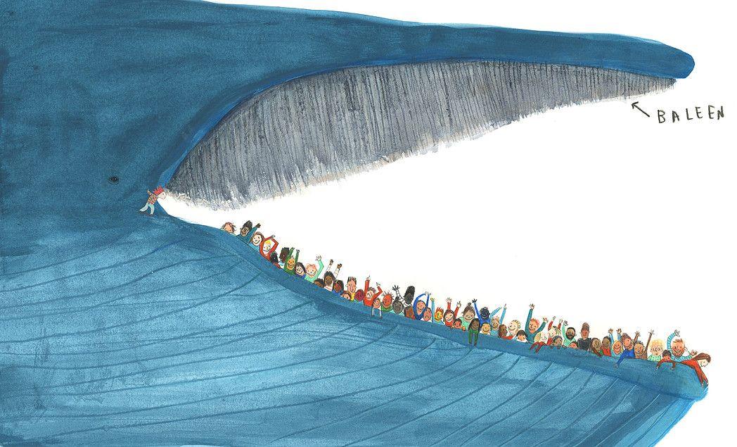 blue whale size - 1000×606