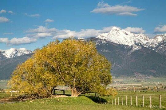 Tree of Life, Charlo, Montana