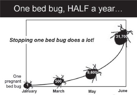 Bed Bug Infestation Bed Bugs Infestation Bed Bugs