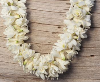 Double tuberose 50 flowers pinterest orchid and flowers double tuberose 50 mightylinksfo