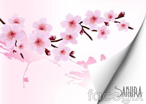 Cherry Blossom Background Vector Cherry Blossom Background Blossoms Art Vector Free