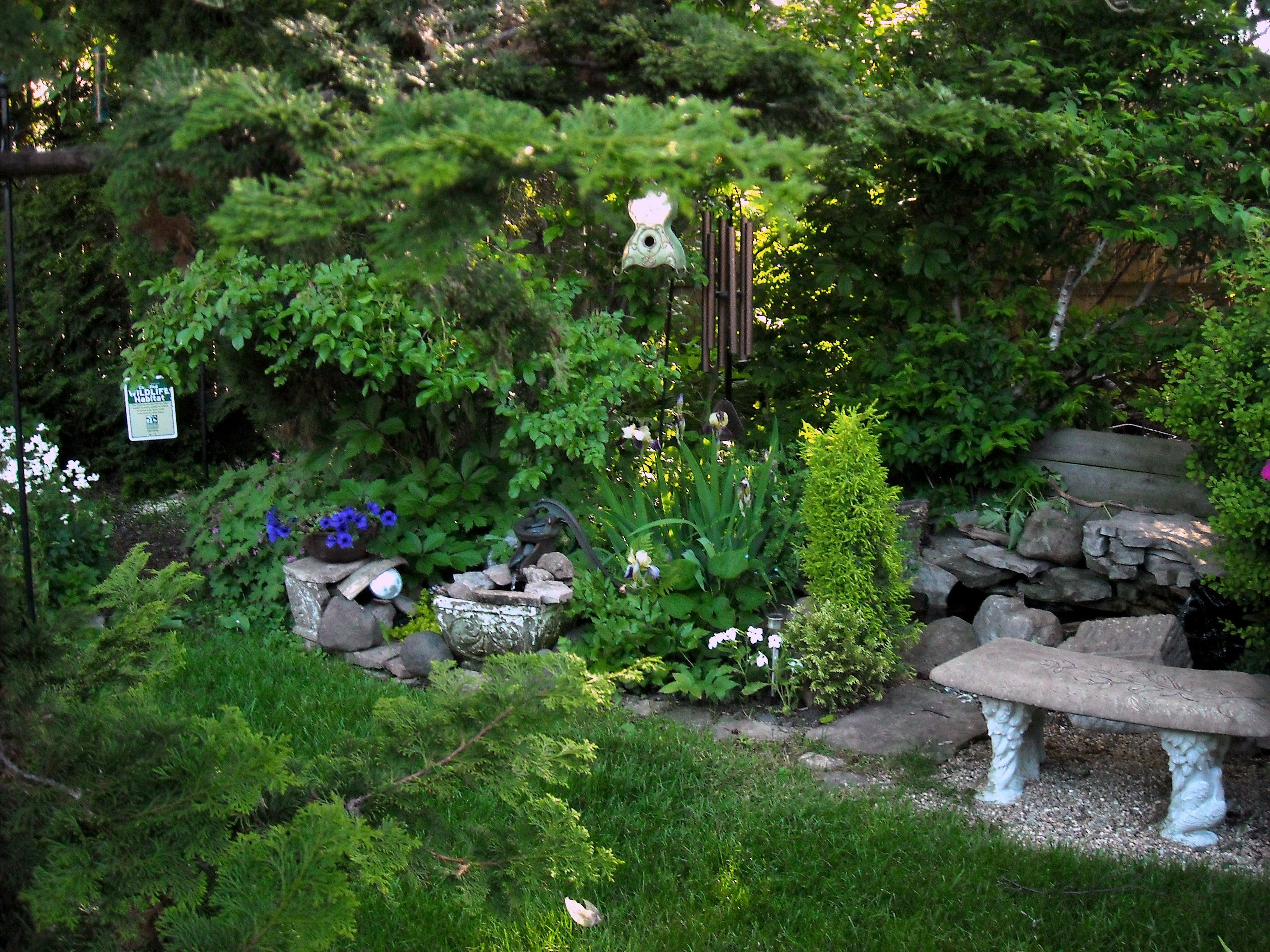 Shady Spot Near My Little Backyard Pond 2013 Ponds 400 x 300