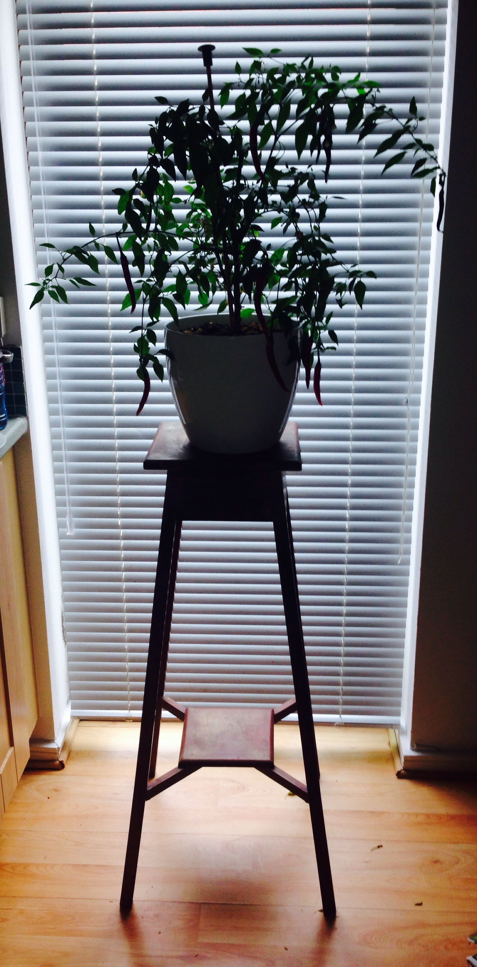 Chilli on car boot plant stand