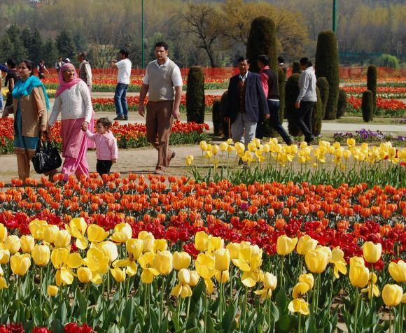 Kashmir's tulip garden is Asia's largest tulip garden and is located in the foothills of the Zabarwan mountain range overlooking the world famous Dal Lake in the heart of capital Srinagar.