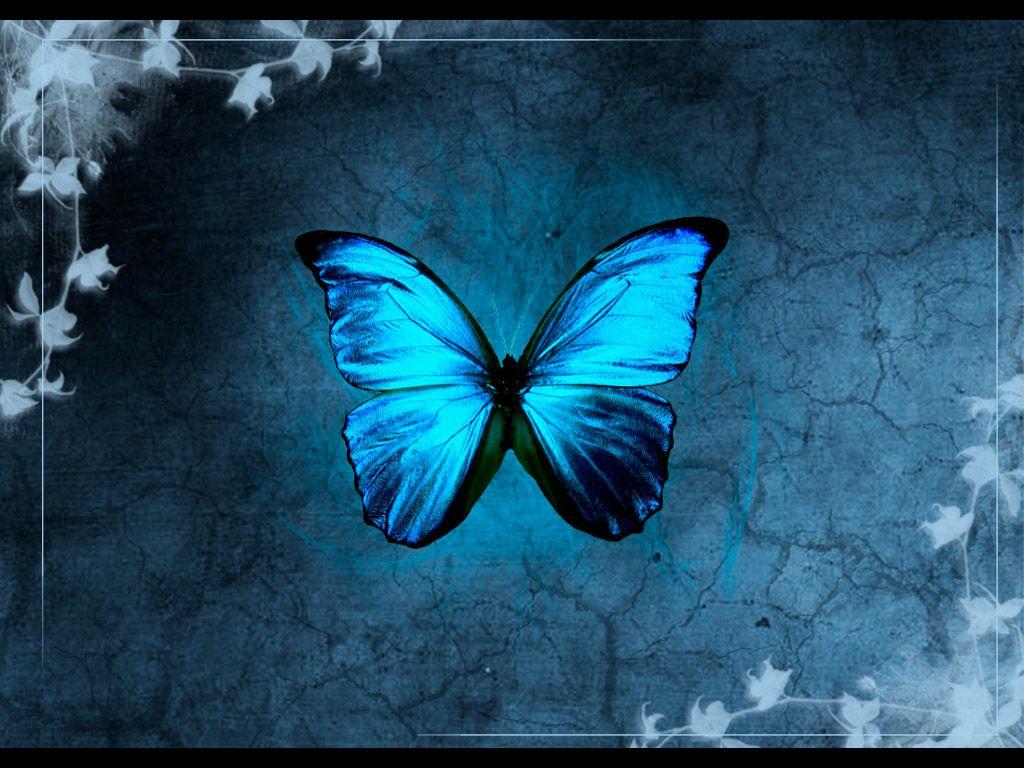 Bluebutterflybymodernmyth gulf of mexico oil spill desktop butterfly wallpaper for desktop in pink purple free butterfly buycottarizona