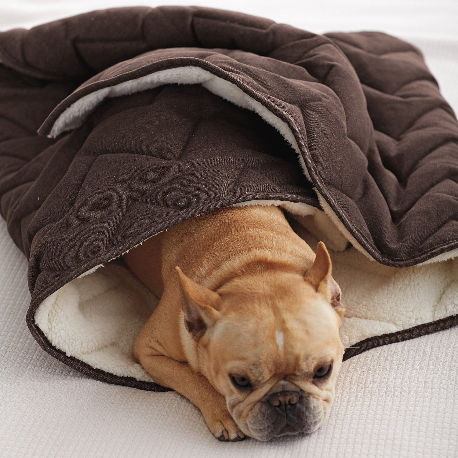 Company Store Specially Sized Pet Denim Sleeping Bag Tcs Down