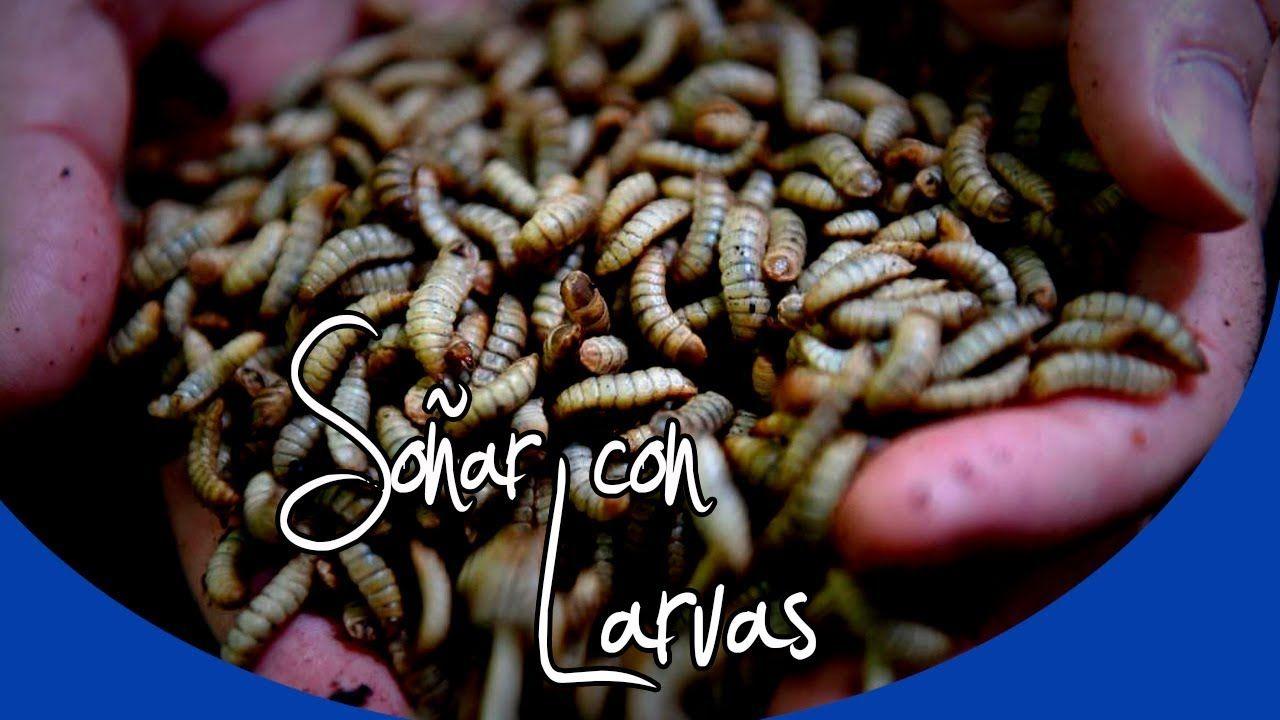 que significa soñar gusanos en tu cuerpo