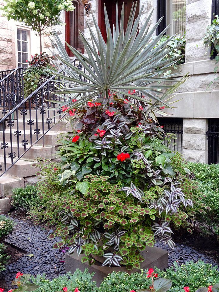 Summer Annuals Planter Container Front Yard Urban Garden - Urban front yard landscaping ideas