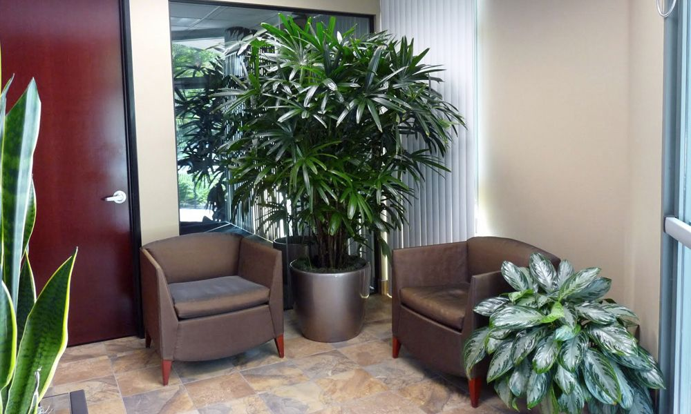 office greenery. Types Of Amazing Office Plants Greenery